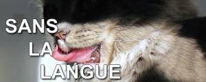 Sans la langue